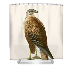 Long Legged Buzzard Shower Curtain by English School