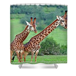Long Necks Together Shower Curtain by Bruce Iorio