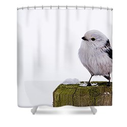 Shower Curtain featuring the photograph Long-tailed Tit On The Pole by Torbjorn Swenelius