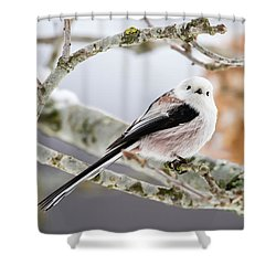 Long-tailed Tit Shower Curtain by Torbjorn Swenelius