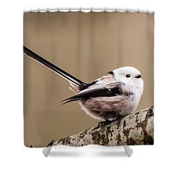 Shower Curtain featuring the photograph Long-tailed Tit Wag The Tail by Torbjorn Swenelius