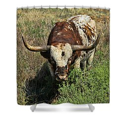 Longhorn II Shower Curtain
