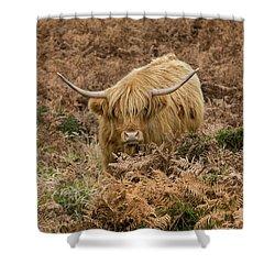 Longhorn On Dartmoor Shower Curtain
