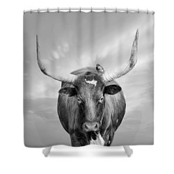 Shower Curtain featuring the photograph Longhorn Respite by Robin-Lee Vieira