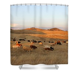 Longhorns Shower Curtain by Diane Bohna