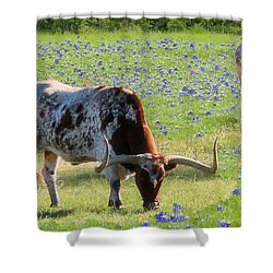 Longhorns In The Bluebonnets Shower Curtain