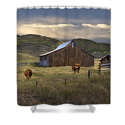Longhorns On The Road To Steamboat Lake Shower Curtain by John Hix