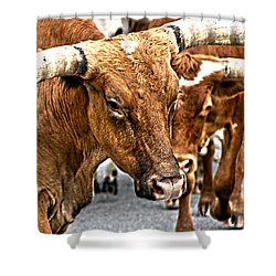 Longhorns Shower Curtain by Toni Hopper