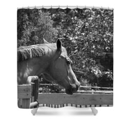Shower Curtain featuring the photograph Longing by Sandi OReilly