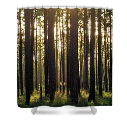 Longleaf Pine Forest Shower Curtain