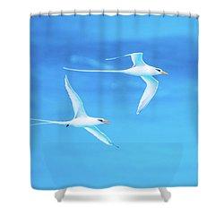 Longtail Dream Team Shower Curtain