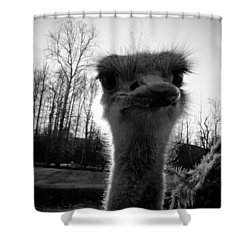Look At Me Now Shower Curtain
