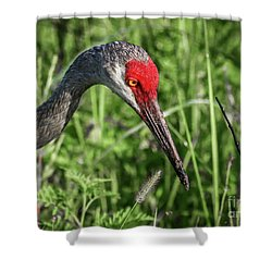 Look Down Crane Shower Curtain