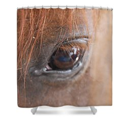 Shower Curtain featuring the photograph Look In The Eye by Vadim Levin