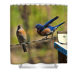 Look My Way Shower Curtain by Mike Dawson