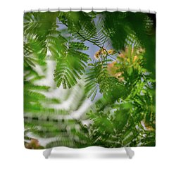 Look To The Sky Shower Curtain