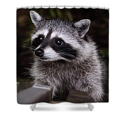 Shower Curtain featuring the photograph Look Who Came For Dinner by Jordan Blackstone