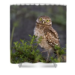 Look Who Is Up Early Shower Curtain