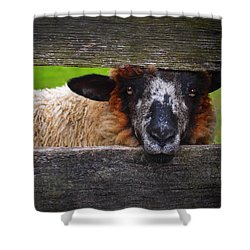 Lookin At Ewe Shower Curtain by Skip Hunt