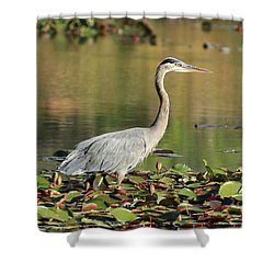 Shower Curtain featuring the photograph Looking Ahead by Lynn Hopwood