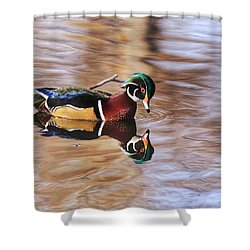 Looking At Me Shower Curtain by Lynn Hopwood