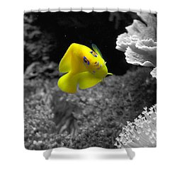 Shower Curtain featuring the photograph Looking At You by Deniece Platt