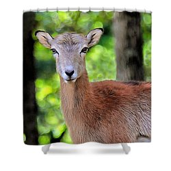 Shower Curtain featuring the photograph Looking At You by Marion Johnson