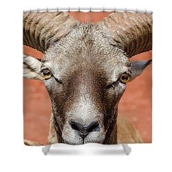 Looking At You Shower Curtain