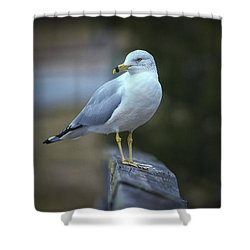 Shower Curtain featuring the photograph Looking Back  by Cindy Lark Hartman