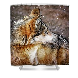 Shower Curtain featuring the mixed media Looking Back by Elaine Malott