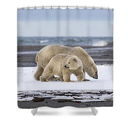 Looking Back In The Arctic Shower Curtain