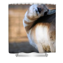 Looking Back Shower Curtain by Karol Livote