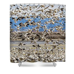 Looking For A Place To Land Shower Curtain
