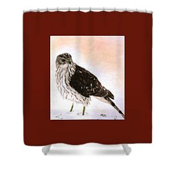 Looking For Breakfast Shower Curtain by Angela Davies