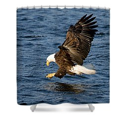Looking For Fish Shower Curtain by Larry Ricker