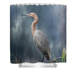 Shower Curtain featuring the photograph Looking For Food by Kim Hojnacki