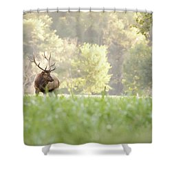 Looking For Love Shower Curtain