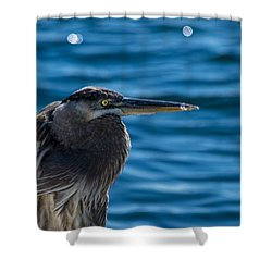 Looking For Lunch Shower Curtain by Marvin Spates