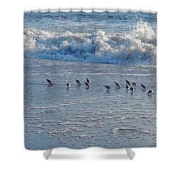 Looking For Munchies Shower Curtain