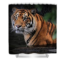 Looking Oh So Sweet Shower Curtain