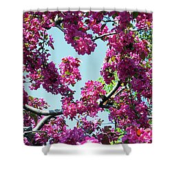 Looking Skyward Shower Curtain
