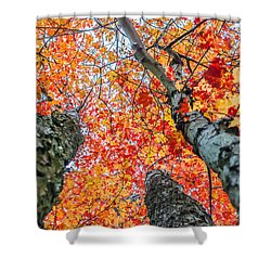 Looking Up - 9743 Shower Curtain by G L Sarti