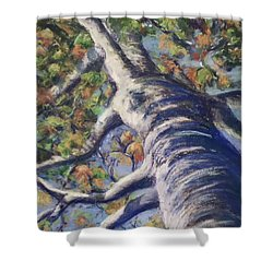 Looking Up - Fall Shower Curtain