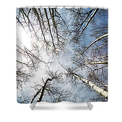 Looking Up On Tall Birch Trees Shower Curtain