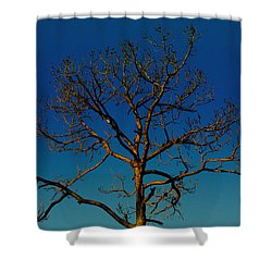 Looking Up, Sunrise, Myakka State Forest Shower Curtain