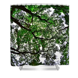 Looking Up The Oaks Shower Curtain