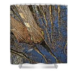 Shower Curtain featuring the photograph Looking Up While Looking Down by Debra and Dave Vanderlaan