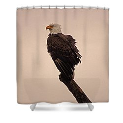 Shower Curtain featuring the photograph Looks Like Reign by Robert Geary