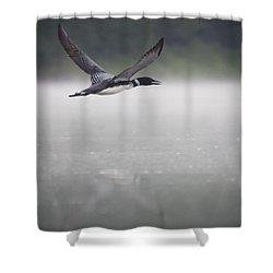 Loon 2 Shower Curtain