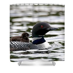 Loon Chick Shower Curtain